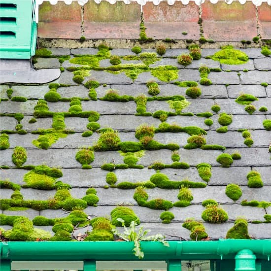 Moss growth on roof